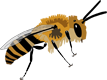 Checklist of the Western Palaearctic Bees (Hymenoptera: Apoidea: Anthophila)